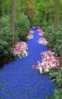 River of Flowers Keukenhof Bulbflower garden, Netherlands