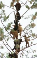 A tree full of baby bears