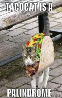 Tacocat is a palindrome