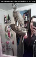 Simba Cat…