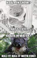 Koala in Snow and Water... LOL