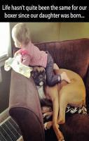 Baby & boxer - This is so cute. What a sweet patient doggy