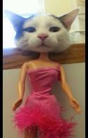 barbie cat