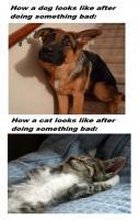 Dogs, Cats Looks After Doing Something Bad