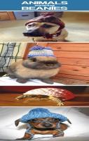 Animals wearing beanies