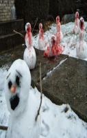 Snow Zombies