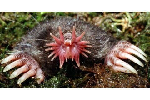 World Ugliest Animals We think this in unbelievable