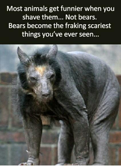 Shaved Bear...lol