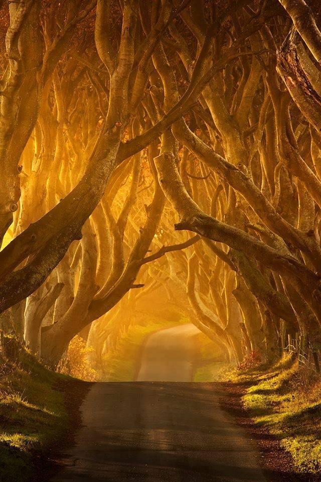 The Dark Hedges Whimsical Road in Ballymoney, Ireland