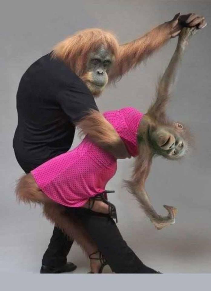 Funny Dancing Monkey Couple