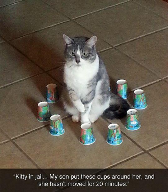 Kitty prison