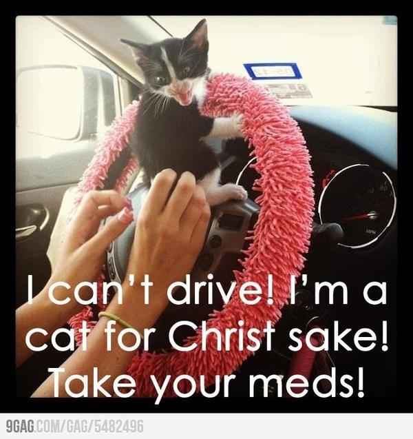 I cant drive Im a cat
