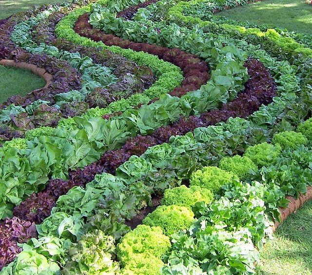 amazing ideas of vegetable garden