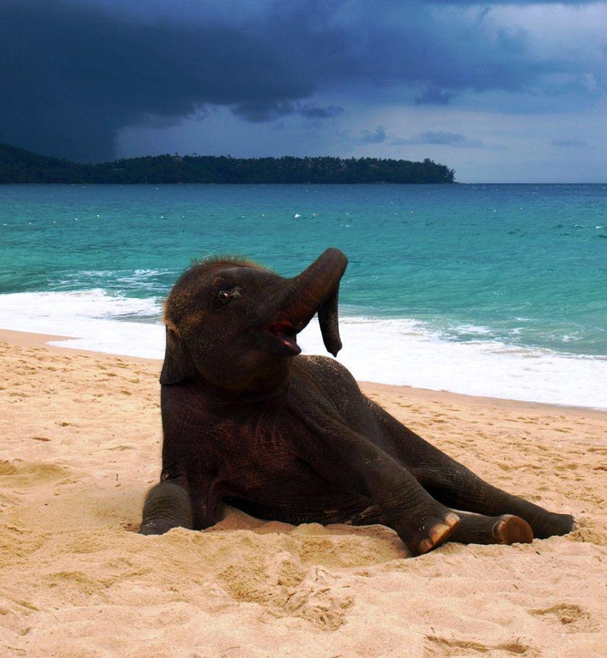 Baby elephant enjoying at beach