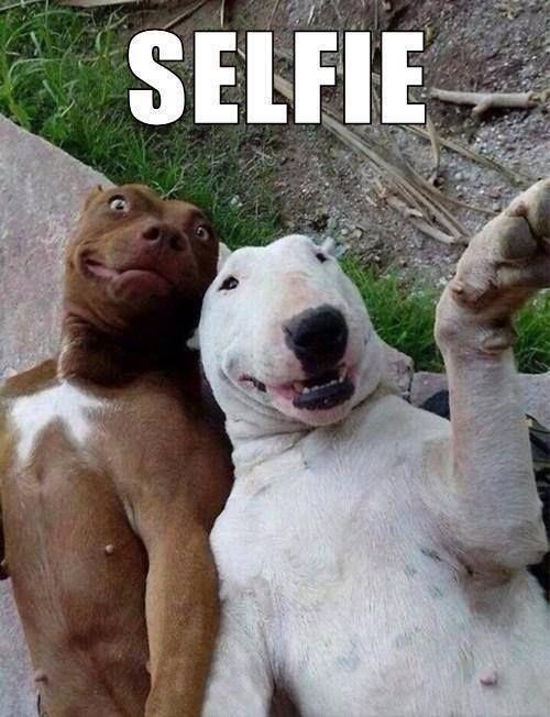 If Dogs Took Selfies