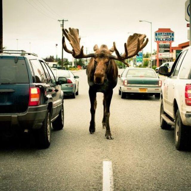 Only Happens in Alaska....