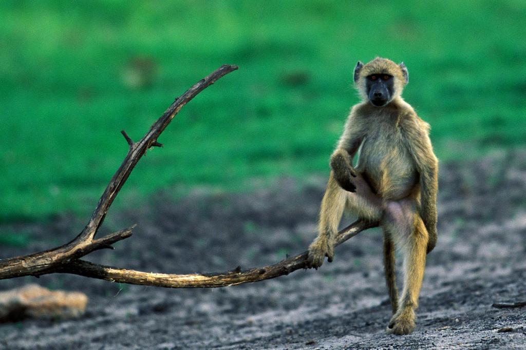 Amazing Monkey Image