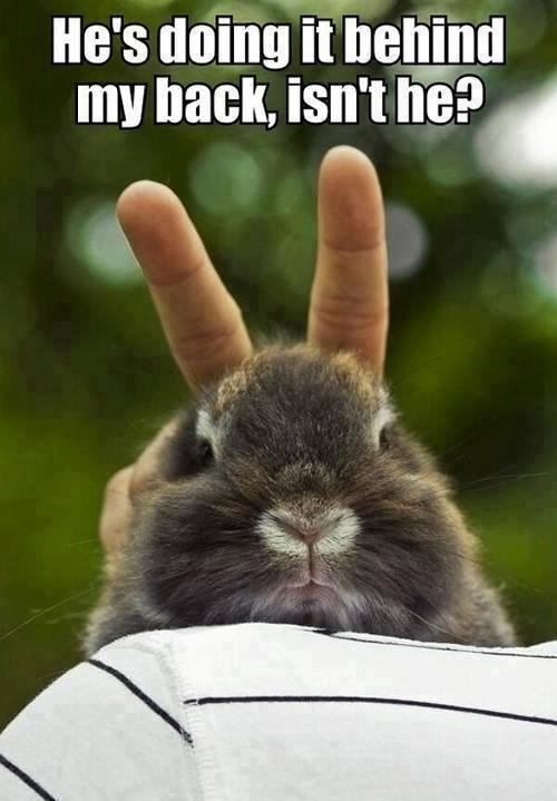 6 Funny Animal Quotes of 2015