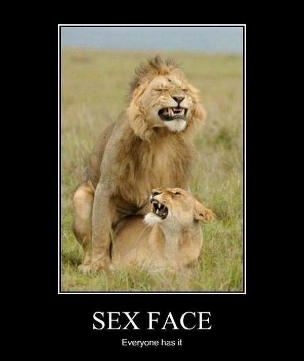 Sex Face