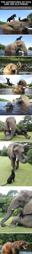 Elephant and Dog Friendship Pictures