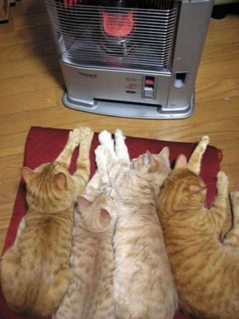 How cats stay warm in the winter