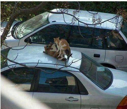 Hahaha cats