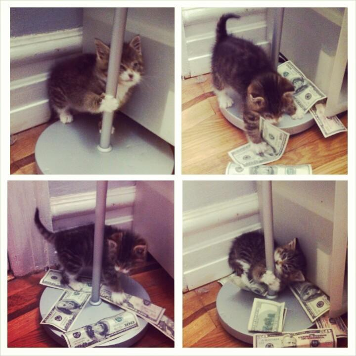 Here's my foster kitten Dusty working the pole to help pay her Vet bi