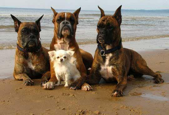Bodyguards…