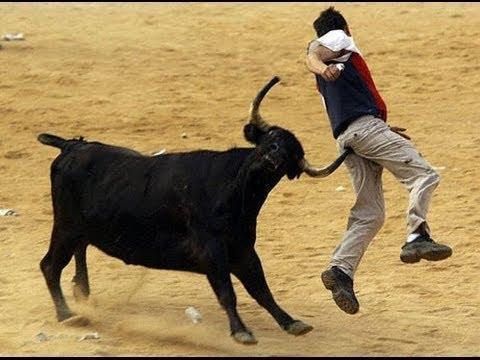 bull take a boy.