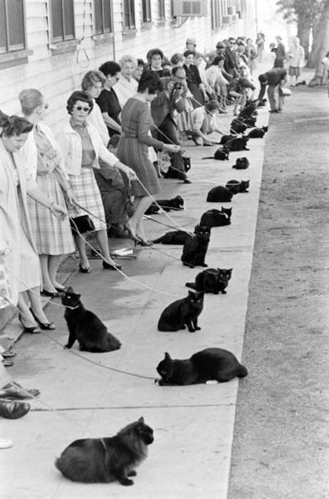 Hollywood audition for black cat, 1961