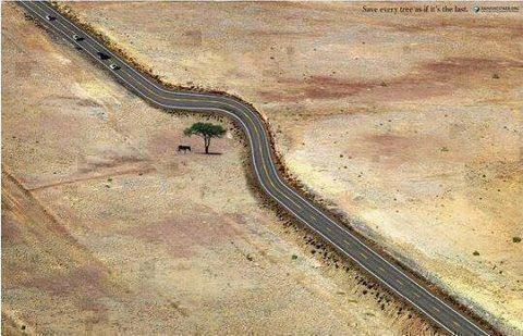 Even Single Tree Matters,