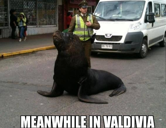 Meanwhile in Valdivia Chile