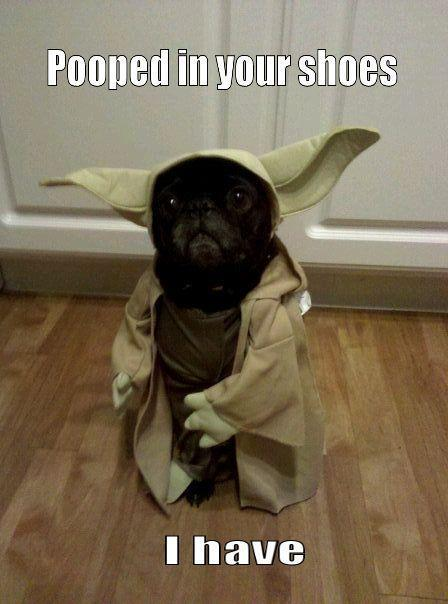 Yoda Dog.