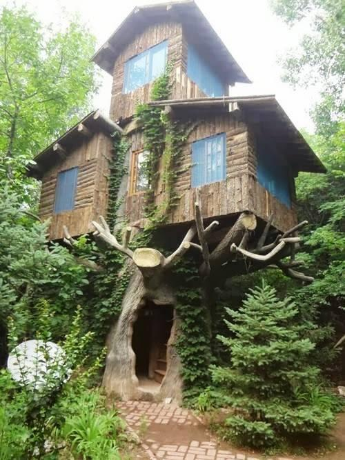 Amazing Tree House Design
