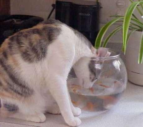 cats wants to eat fishes.