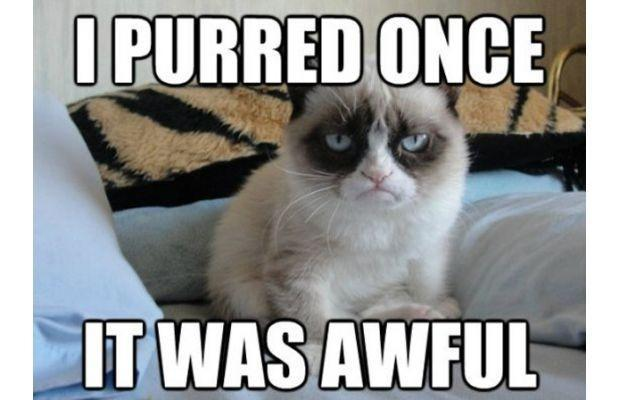 Funniest Grumpy Cat Memes
