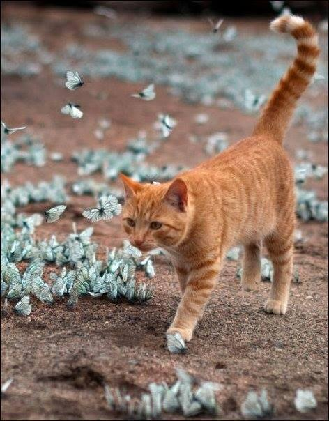 Cute Cat Playing With Butterflies