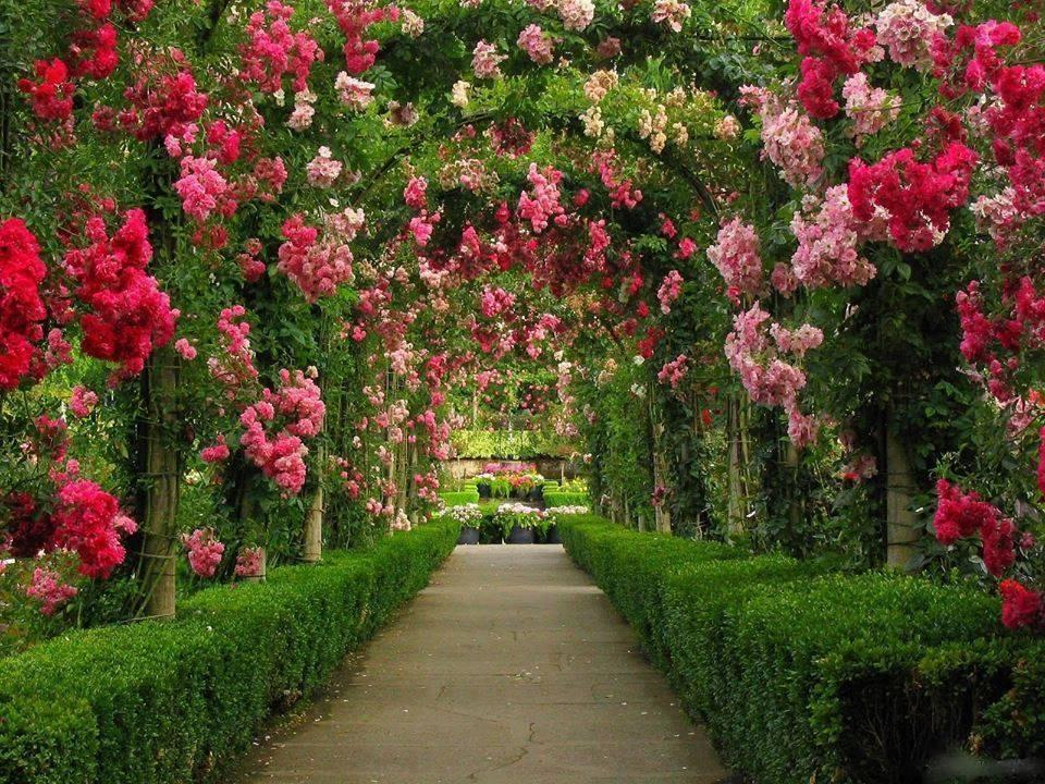 Amazing Flower Garden Photo