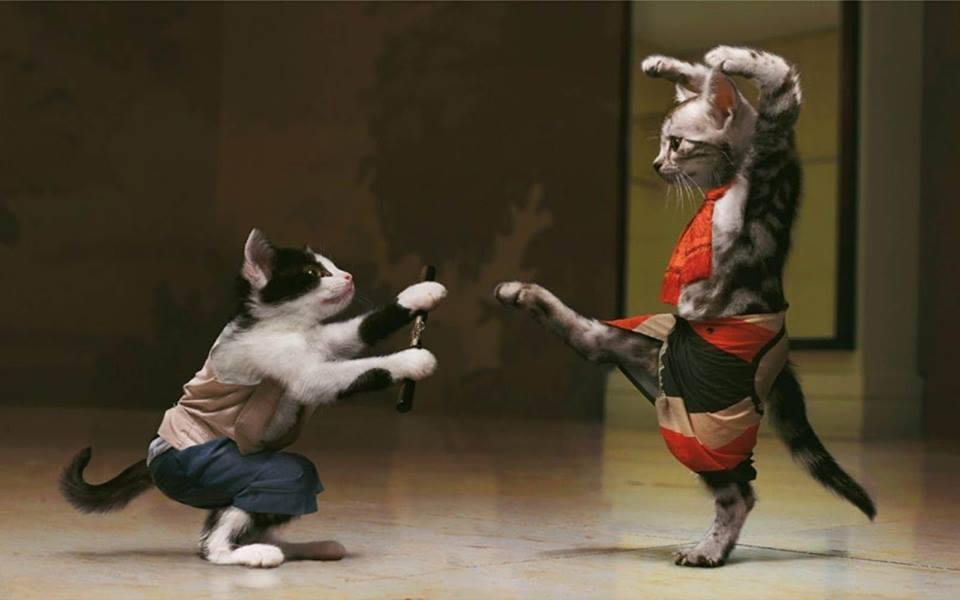 Amazing Ninja Kitties