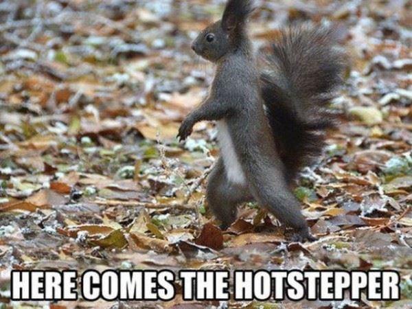 Hotstepper