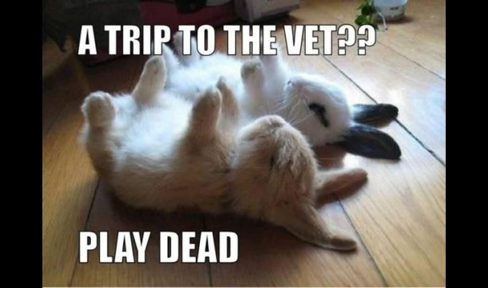 Thats Good Play dead