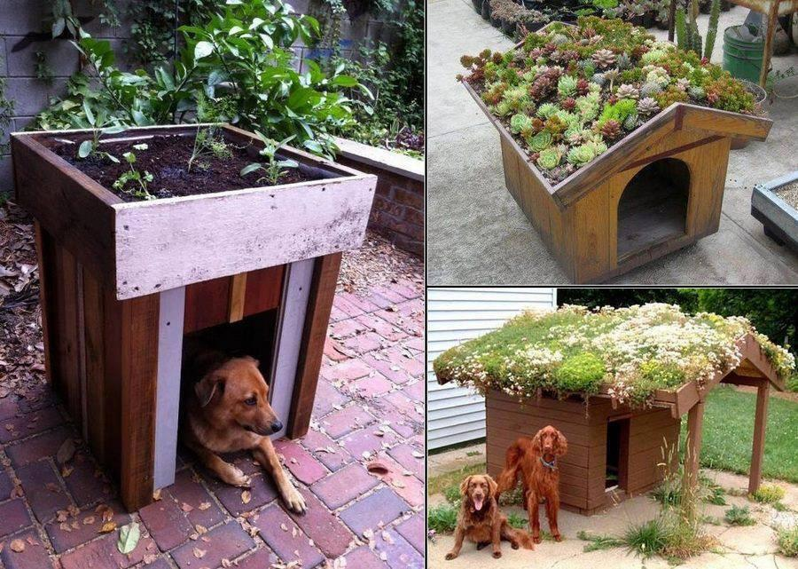 Build a Green Roof on Your Dog's House