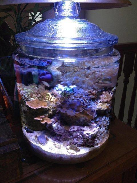 Coral reef in a cookie jar after 5 months