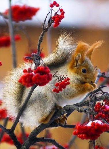 The Best snap shoot of Squirrel