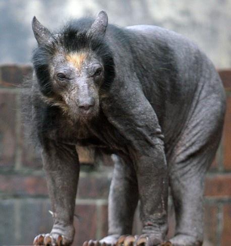 That's a bear
