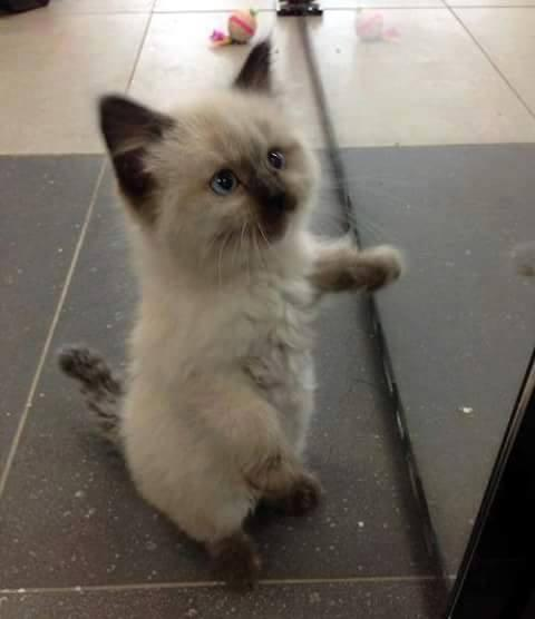 Cute Cat Standing on two feet...