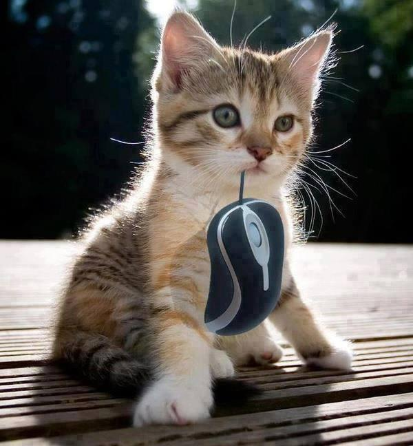 The kitten catched the mouse