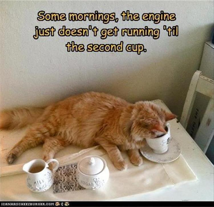Funny cat Take a Tea