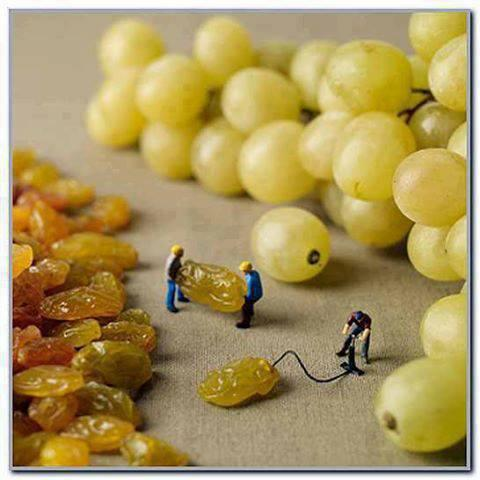 Dry Grapes