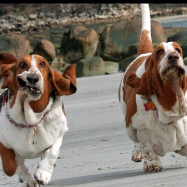 Fat Dogs Runny Funny Pictures